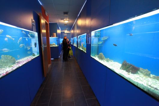 Species of the Adriatic Sea at Baška Aquarium on Krk